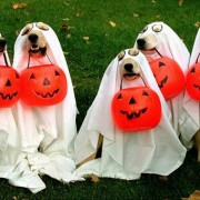Dogs dressed up as ghosts with halloween treat buckets in their mouth