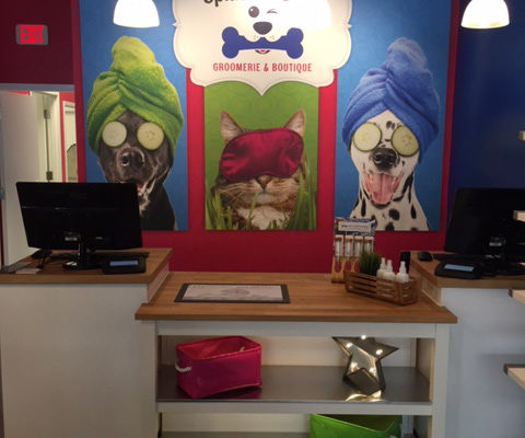 Splash and Dash Dog Grooming baton rouge