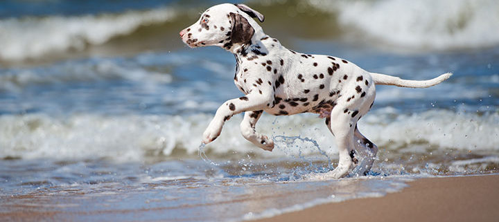 Top 10 Dog Friendly Beaches, Los Angeles