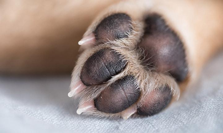 Soft Paws Australia Dogs