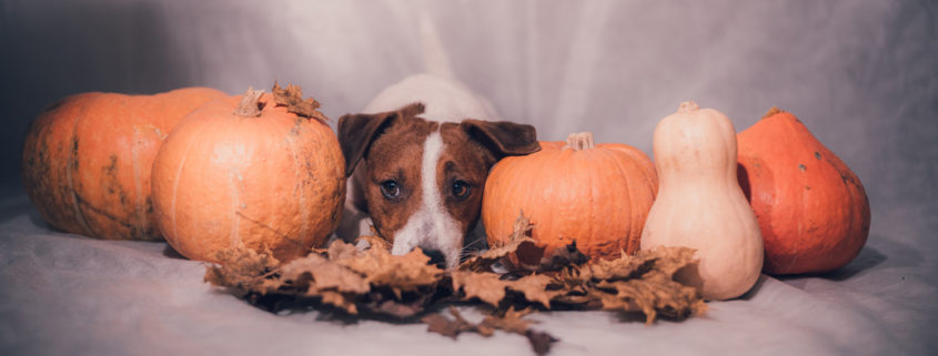 tips for thanksgiving leftovers for your dog